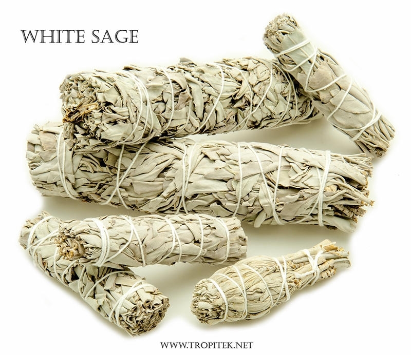 Pure White Feather Woven Dream Catcher Circular Net With: Sage, Palo Santo & Herbs For Smudge Ceremonies > Feathers