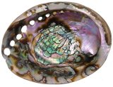 SS707AB Green Old Growth Abalone Shells 6.5 inch +