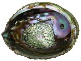 SS707C Natural Pink Abalone Shells 5 inch +