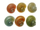 SS106G Turbo Shells Assorted Colours 2""