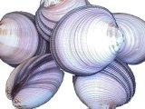 SS292 Chocolate Clam Shell Pairs 4""
