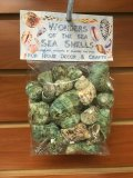 WS183 Wonders Of The Sea Pack - Green Turbo Bruneus Shells