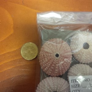 SS417 Pink Sea Urchins 1.5 - 2""