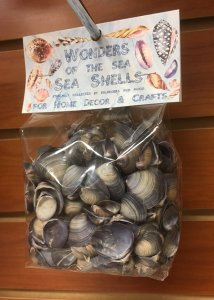 WS146 Wonders Of The Sea Pack - Purple Cay Cay Shells 0.5+""